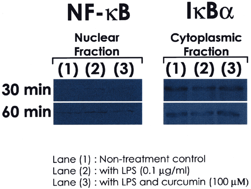 Nf kb activation genesis